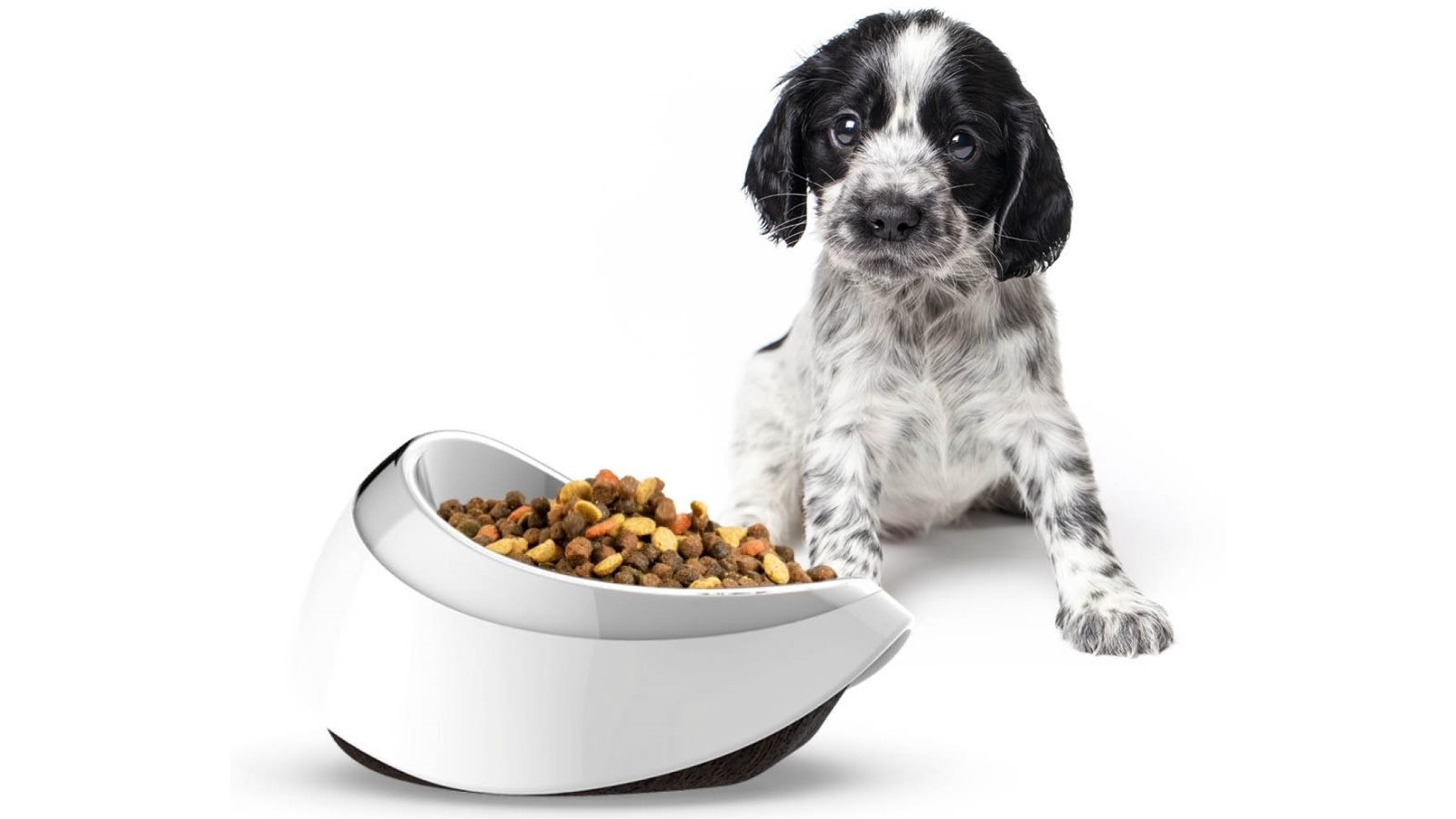 Buy Petble Pet Smart Food Bowl with In-Built Scale | Harvey Norman AU