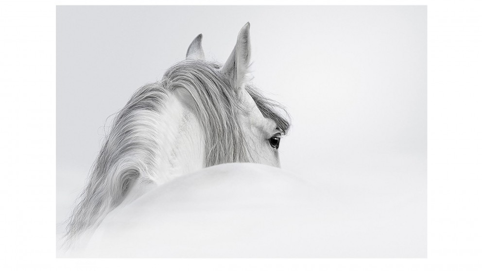 Artbox Andalusian Horse Mist