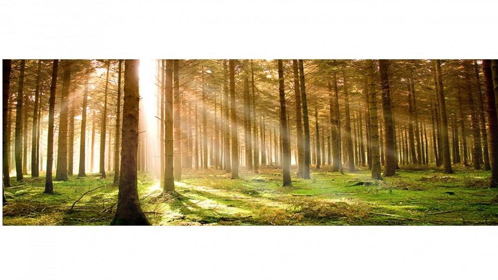 Artbox Autumn Pine Forest