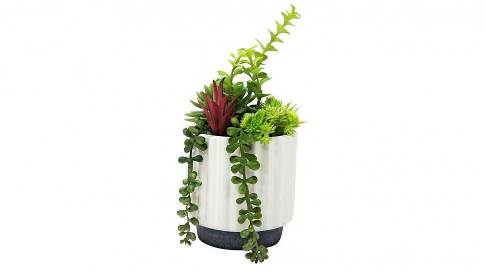 Succulents White Pot