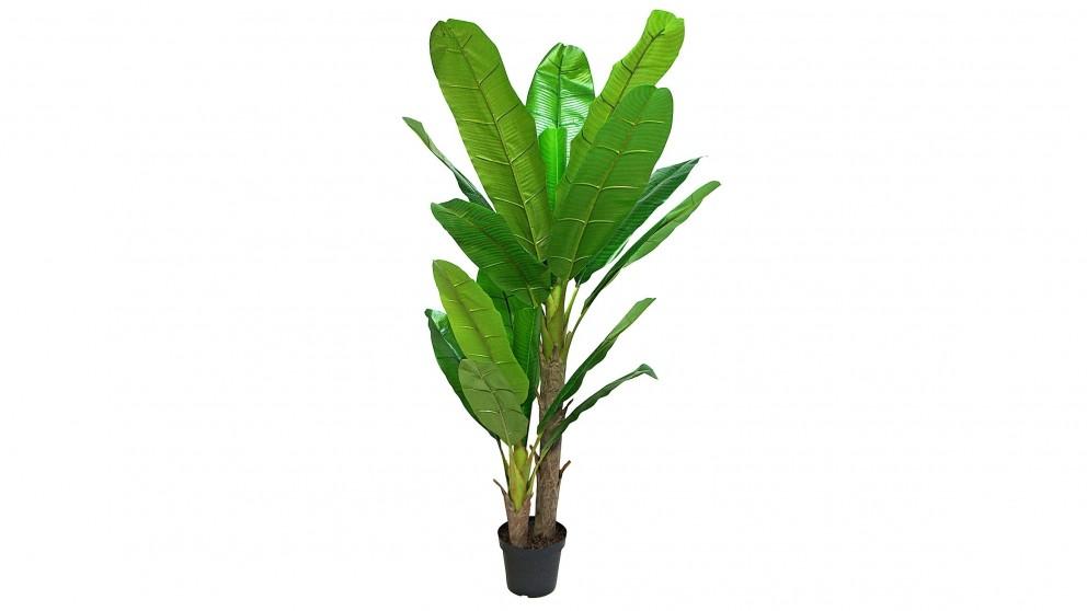 Banana Tree Potted Plant