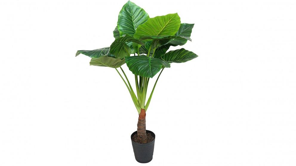 Big Taro Potted Plant