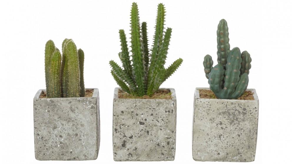 Cactus in Cement Pot