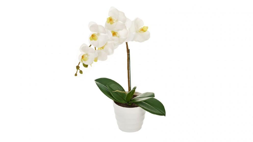 Cooper & Co. Artificial Orchid Plant - 50cm