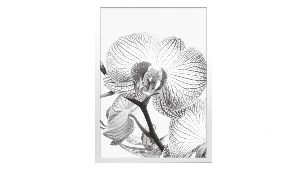 Profile Products Framed Art - Bloom Flowers BW 3 - 75 x 100cm