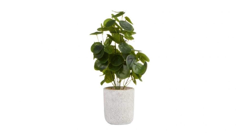 Cooper & Co. Money Bag Artificial Plant - 40cm