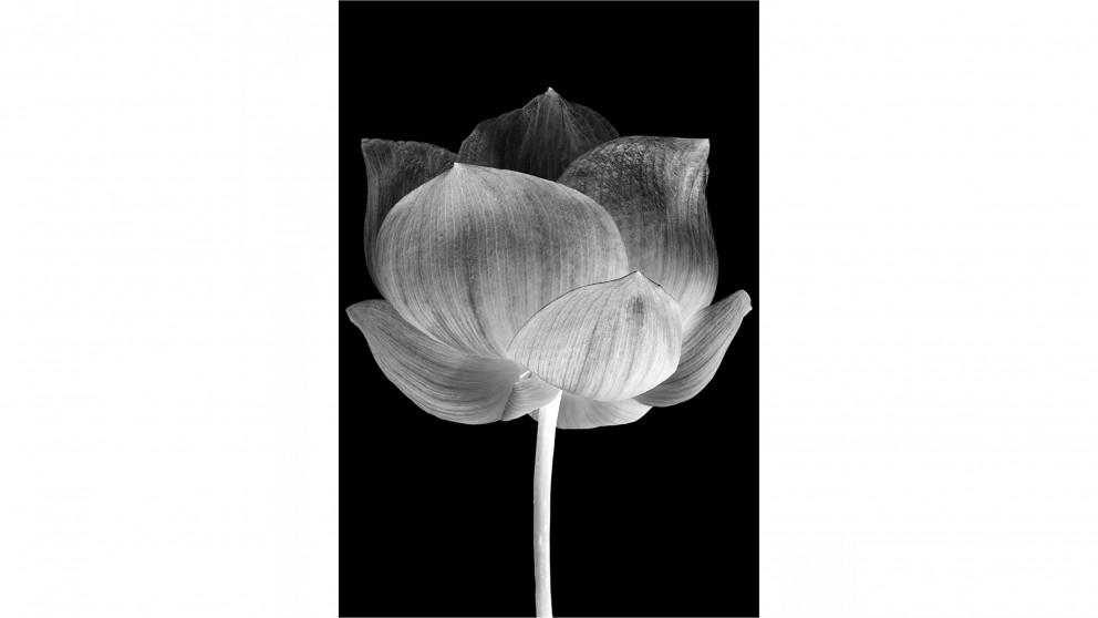 Artbox Black Lotus