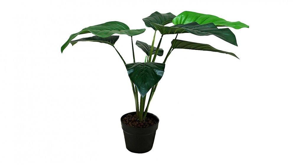 Philodendron Potted Plant