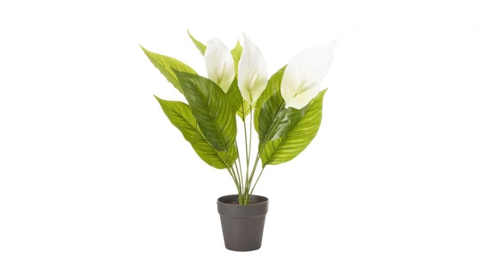 Cooper & Co. Artificial Peace Lily Plant - 55cm