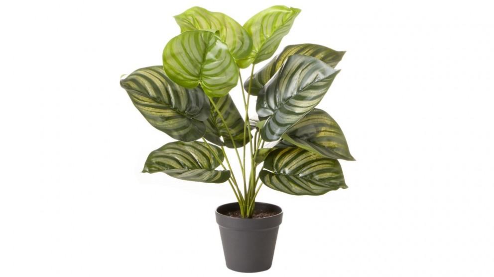 Cooper & Co. 45cm Artificial Calathea Orbifolia Plant