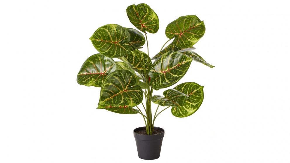 Cooper & Co. Faux Taro Plant - 60cm