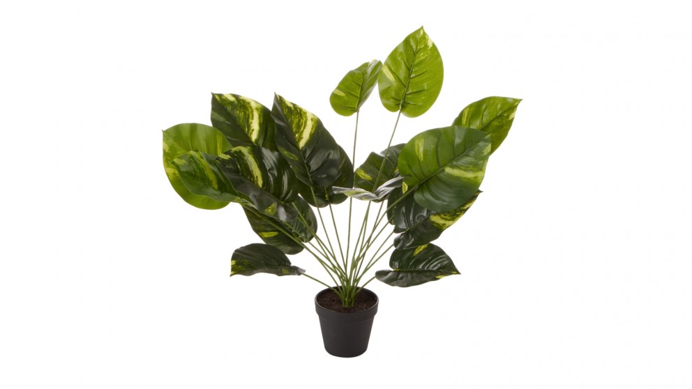 Cooper &Co. Artificial Golden Pothis Plant - 55cm