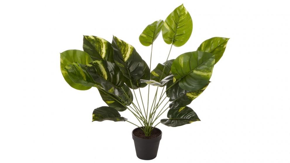 Cooper & Co. Artificial Diefenbachia Plant - 45cm