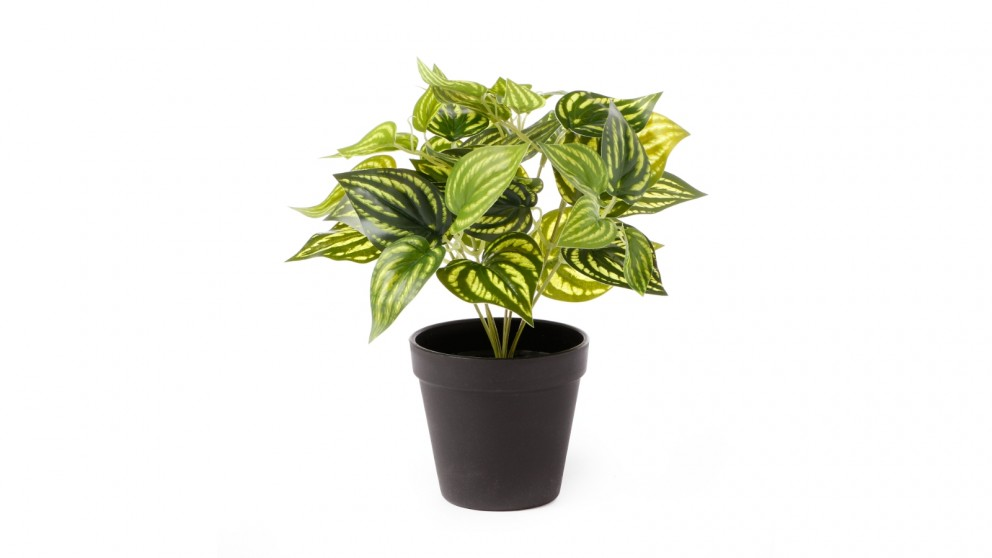 Cooper & Co. Artificial Water Leaf Potted Plant - 28cm