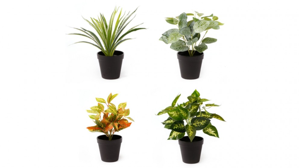 Cooper & Co. Potted Plant Packs 28cm - Pack of 4