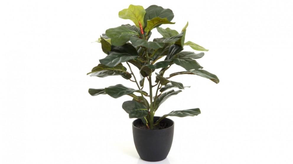 Fiddle Leaf Potted Plant