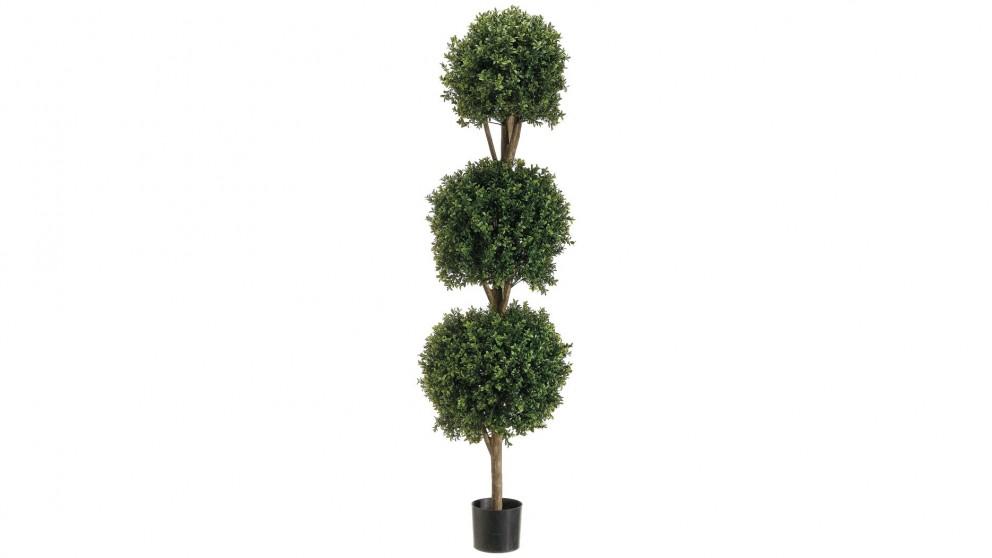 Boxwood Triple Ball Tree in Pot - Green