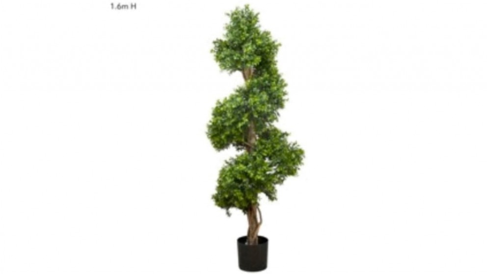 Boxwood Lush Spiral Tree