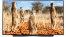 LG 65-inch CX Cinema Series 4K UHD Self-lit OLED Smart TV Ai ThinQ