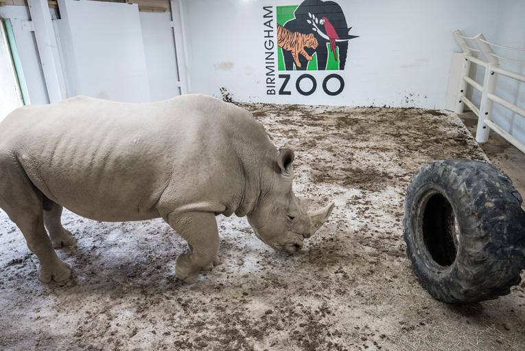 2 Carpets. 2 Weeks. 1 Rhino.