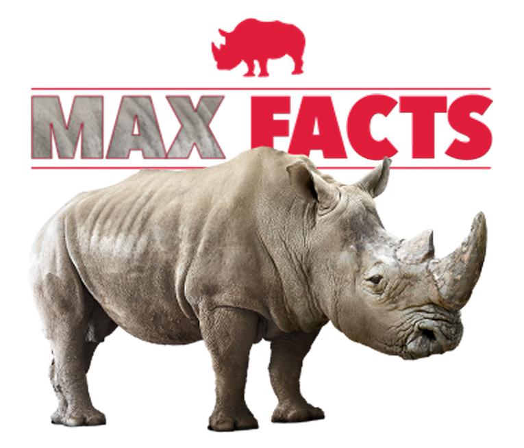 Meet Max the Rhino