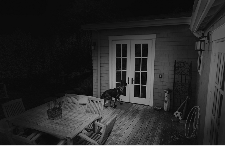 A night-vision video shot shows a house porch while a dog waits at the house door