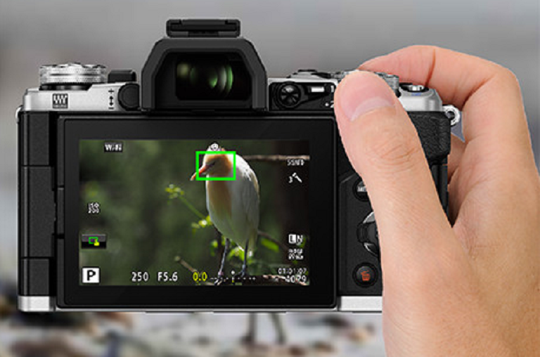 The Olympus M5 focuses on a bird